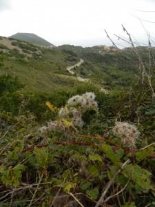vista sul monte giove