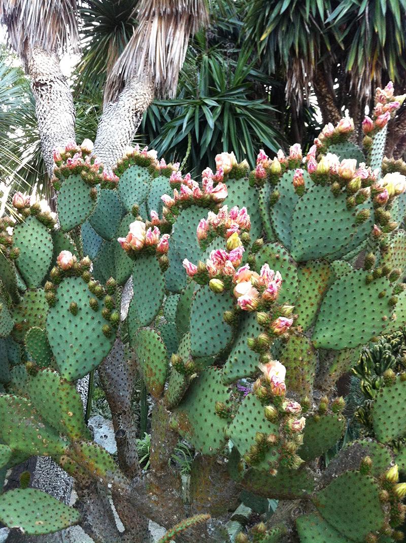 L 39 orto botanico del salento la cutura solo per piante - Piante in giardino ...