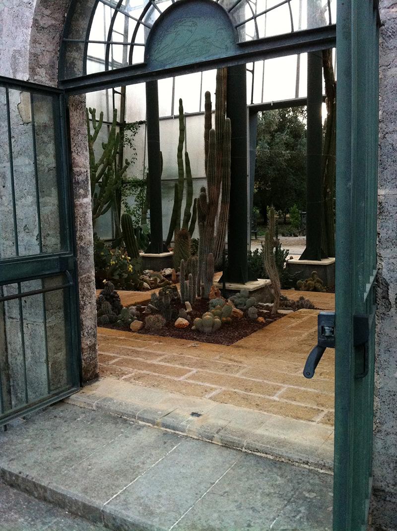 L 39 orto botanico del salento la cutura solo per piante for Serra piante grasse