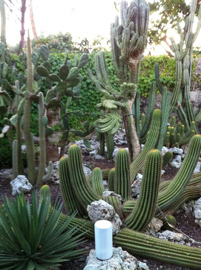 Orto botanico in puglia cideviandare for Serra piante grasse